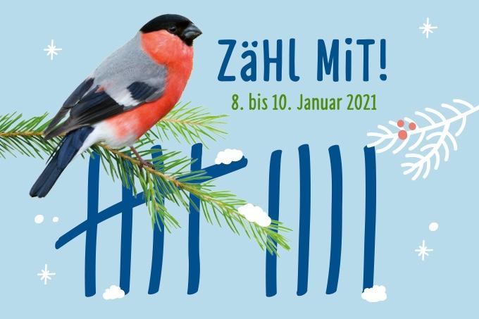 Mahlsdorf LIVE - An diesem Wochenende: Zählt die Wintervögel in Marzahn-Hellersdorf